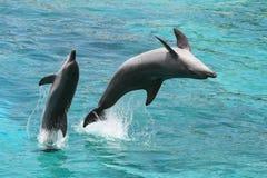 Dolphin Jump Stock Photo