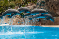 Dolphin jump royalty free stock images