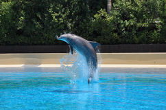 Dolphin Jump Stock Photography