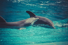 Dolphin jump out of the water in sea Royalty Free Stock Images