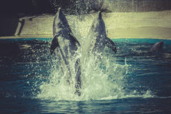 Dolphin jump out of the water in sea Royalty Free Stock Photography