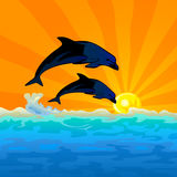 Dolphin jump with sunset background stock image