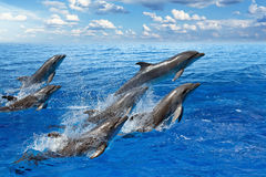 Dolphin jumping. Jumping dolphins, blue sea and sky, white clouds royalty free stock image