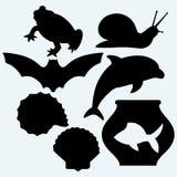 Dolphin jumping, fish in aquarium, frog, bat, garden snail and sea snail Royalty Free Stock Photos