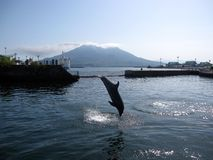 Dolphin jumping in front of volcano island. Kagoshima, the capital city of Kagoshima Prefecture, Japan royalty free stock photos