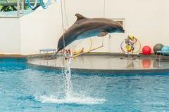Dolphin jumping through a hoop Royalty Free Stock Photos