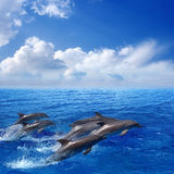 Dolphin jumping. Marine life photograph - dolphins jumping in blue sea, white clouds in sky stock photos