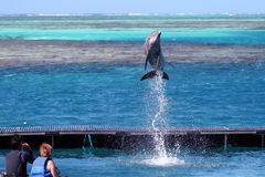 Dolphin jumping at order Stock Photos