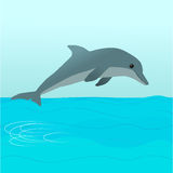 Dolphin. A dolphin jumping out of the water Stock Images