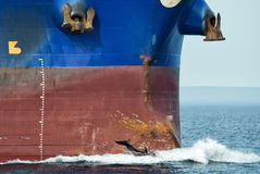Dolphin jumping over ship prow. Dolphin jumping near big ship bow stock photo