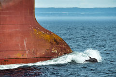 Dolphin jumping over ship prow. Dolphin jumping near big ship bow stock images