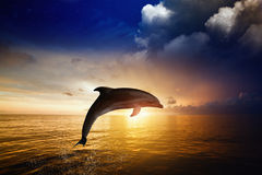 Dolphin jumping. Red sunset over sea, glowing horizon