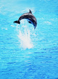 Dolphin jumping in the sea Royalty Free Stock Photography