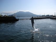 Dolphin jumping up in front of volcano island Japan. Dolphin jumping up in front of volcano island, Kagoshima, the capital city of Kagoshima Prefecture, Japan stock images