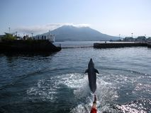 Dolphin jumping up in front of volcano island. Kagoshima, the capital city of Kagoshima Prefecture, Japan stock photography