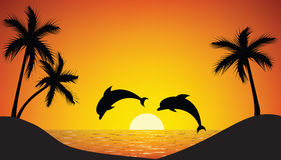 Dolphin jumping up from the ocean. At sunset Stock Images
