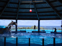 Dolphin jumps in air from water tank during show Royalty Free Stock Photos