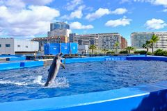 Oceanografic Valencia, Dolphinarium. Dolphin that jumps into a basin of the Oceanographic complex. Oceanografic is located in Valencia, Spain and has the largest royalty free stock images