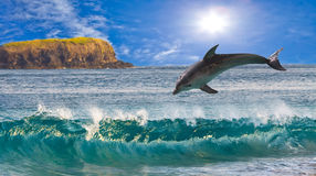 The dolphin jumps out of waves at ocean Royalty Free Stock Image