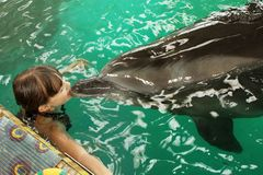 Dolphin kisses a girl, swimming with a dolphin, communication with animals. Bright emotion stock images