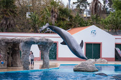 Dolphin in Lisbon Zoo royalty free stock images