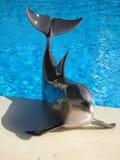Dolphin modelo imagen de archivo