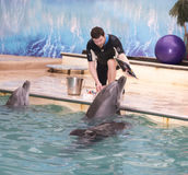 Dolphin - Mom draws a picture under coach Royalty Free Stock Images