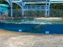 The dolphin nursery  at Seaworld in Orlando, Florida