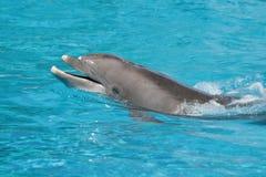 Dolphin in the ocean Stock Photos