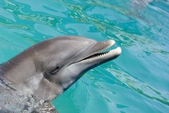 Dolphin in ocean. Dolphin looking forward stock images