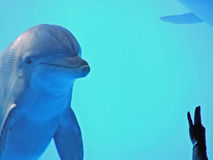 Dolphin in ocean world Royalty Free Stock Photos