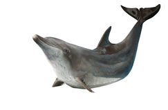 The dolphin in with path Royalty Free Stock Image