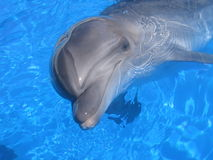 Dolphin Picture - Stock Photos Royalty Free Stock Photography
