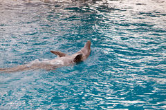Dolphin play Stock Photography