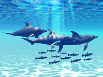Dolphin Play. Three Bottlenose Dolphins swim with a group of reef fish Royalty Free Stock Photo