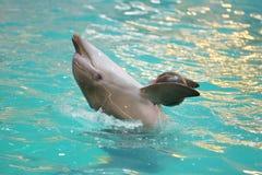 dolphin Flipper Stock Photos