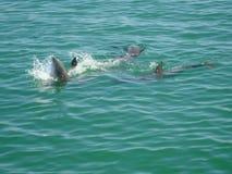 Dolphin play Stock Photos