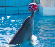 Dolphin playing Stock Photography
