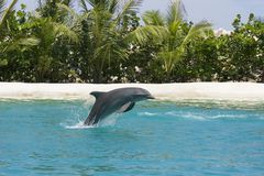 Free Dolphin Playing Stock Image - 721181