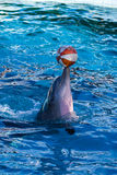 Dolphin playing with a ball Stock Photography