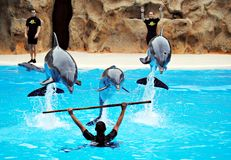Dolphin playing with people Stock Photo