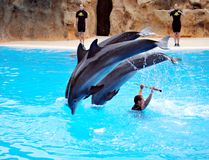 Dolphin playing with people Royalty Free Stock Photos