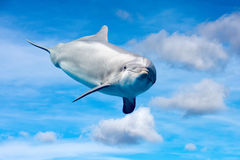 Dolphin playing in the sky Royalty Free Stock Photos