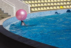 Dolphin plays with a ball. Dolphin playing with a ball in the pool. Floats carrying his head Royalty Free Stock Images