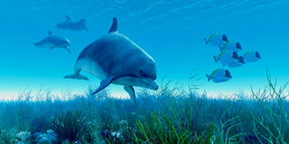 Dolphin Pod Stock Photo
