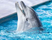 Dolphin in the pool Royalty Free Stock Images