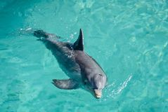 DOLPHIN IN THE POOL Stock Photos