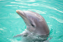 Dolphin in the pool in Mexico Stock Photography