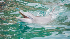 Dolphin in the pool in Mexico Royalty Free Stock Images