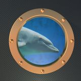 Dolphin on the porthole Royalty Free Stock Photography